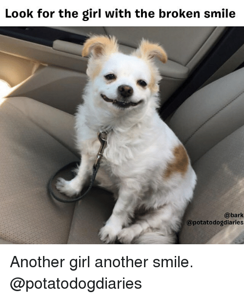 Memes, Girl, and Smile: Look for the girl with the broken smile  @bark  @potatodogdiaries Another girl another smile. @potatodogdiaries