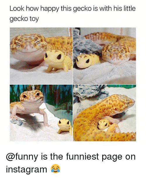 Funny, Instagram, and Happy: Look how happy this gecko is with his little  gecko toy @funny is the funniest page on instagram 😂