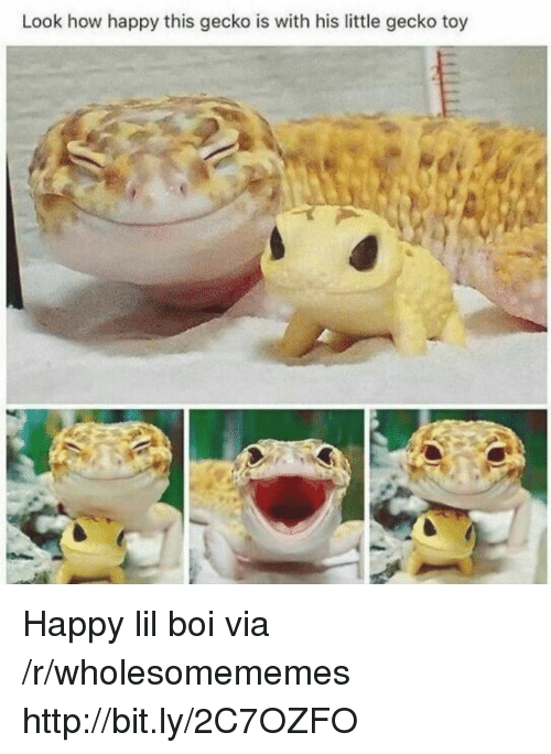 gecko: Look how happy this gecko is with his little gecko toy Happy lil boi via /r/wholesomememes http://bit.ly/2C7OZFO