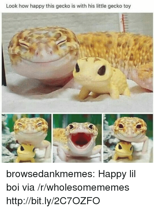 Tumblr, Blog, and Happy: Look how happy this gecko is with his little gecko toy browsedankmemes:  Happy lil boi via /r/wholesomememes http://bit.ly/2C7OZFO