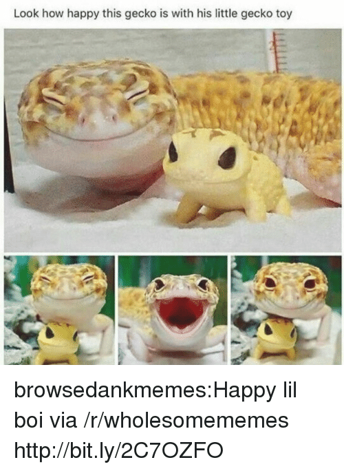 Tumblr, Blog, and Happy: Look how happy this gecko is with his little gecko toy browsedankmemes:Happy lil boi via /r/wholesomememes http://bit.ly/2C7OZFO