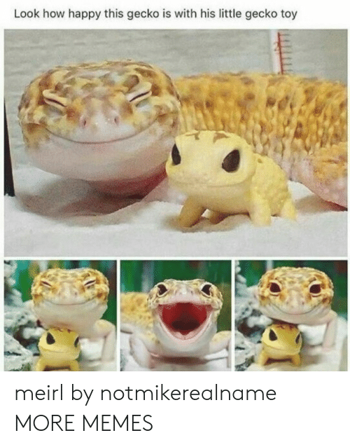 gecko: Look how happy this gecko is with his little gecko toy meirl by notmikerealname MORE MEMES