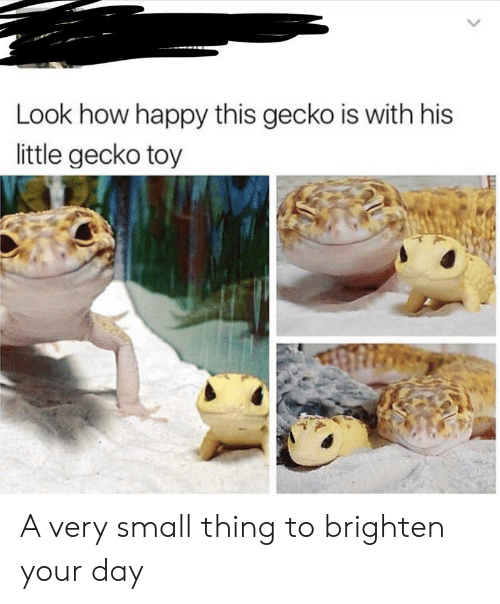 gecko: Look how happy this gecko is with his  little gecko toy A very small thing to brighten your day