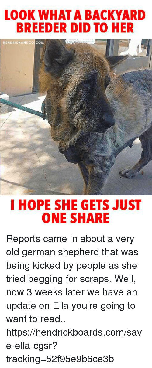 Memes, German Shepherd, and Old: LOOK WHAT A BACKYARD  BREEDER DID TO HER  HENDRICKANDCO COM  I HOPE SHE GETS JUST  ONE SHARE Reports came in about a very old german shepherd that was being kicked by people as she tried begging for scraps. Well, now 3 weeks later we have an update on Ella you're going to want to read... https://hendrickboards.com/save-ella-cgsr?tracking=52f95e9b6ce3b