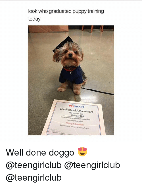 Girl, Petsmart, and Puppy: look who graduated puppy training  today  PETSMART  Certificate of Achievement  This certifies that  Stringer Bell  necessary to complete  Puppy Education Well done doggo 😍 @teengirlclub @teengirlclub @teengirlclub