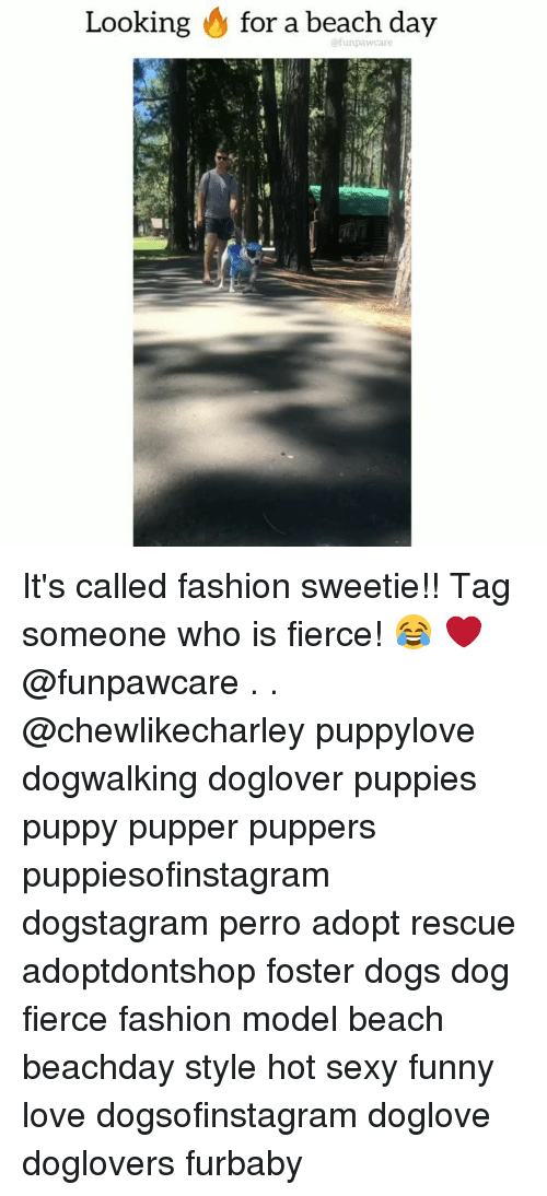 Dogs, Fashion, and Funny: Looking & for a beach day  @funpawcare It's called fashion sweetie!! Tag someone who is fierce! 😂 ❤️ @funpawcare . . @chewlikecharley puppylove dogwalking doglover puppies puppy pupper puppers puppiesofinstagram dogstagram perro adopt rescue adoptdontshop foster dogs dog fierce fashion model beach beachday style hot sexy funny love dogsofinstagram doglove doglovers furbaby