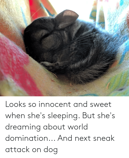 innocent: Looks so innocent and sweet when she's sleeping. But she's dreaming about world domination... And next sneak attack on dog
