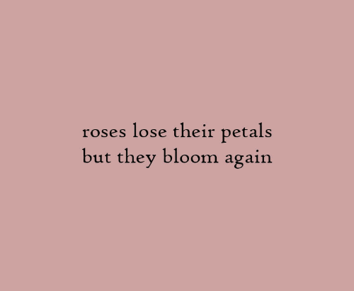 Roses, They, and Bloom: lose their petals  but they bloom again  roses