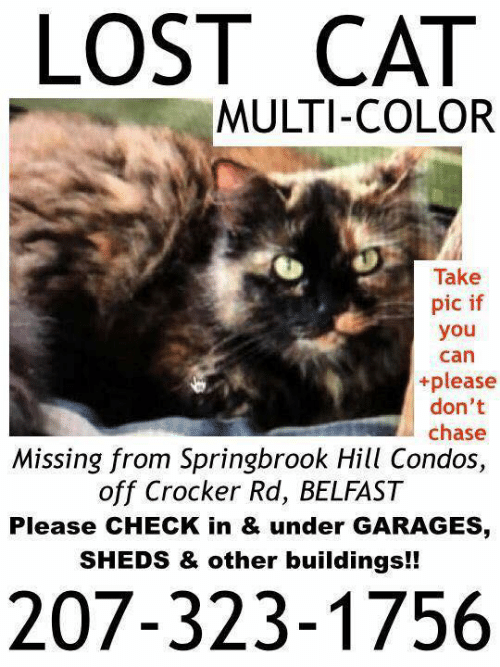 Memes, Lost, and Chase: LOST CAT  MULTI-COLOR  Take  pic if  you  can  +please  don't  chase  Missing from Springbrook Hill Condos,  off Crocker Rd, BELFAST  Please CHECK in & under GARAGES  SHEDS & other buildings!!  207-323-1756