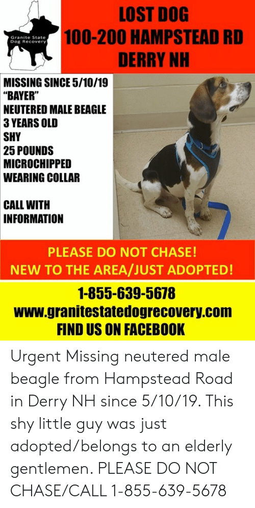 "Facebook, Memes, and Lost: LOST DOG  100-200 HAMPSTEAD RD  DERRY NH  Granite State  Dog Recovery  MISSING SINCE 5/10/19  ""BAYER""  NEUTERED MALE BEAGLE  3 YEARS OLD  SHY  25 POUNDS  MICROCHIPPED  WEARING COLLAR  CALL WITH  INFORMATION  PLEASE DO NOT CHASE!  NEW TO THE AREA/JUST ADOPTED  1-855-639-5678  www.granitestatedogrecovery.com  FIND US ON FACEBOOK Urgent Missing neutered male beagle from Hampstead Road in Derry NH since 5/10/19.  This shy little guy was just adopted/belongs to an elderly gentlemen.  PLEASE DO NOT CHASE/CALL 1-855-639-5678"