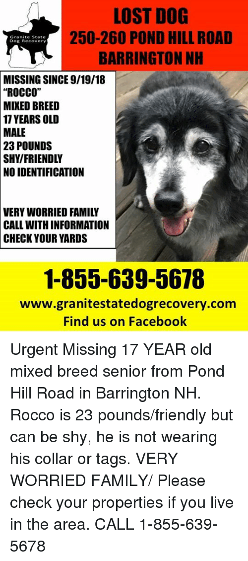 """Facebook, Family, and Memes: LOST DOG  250-260 POND HILL ROAD  BARRINGTON NH  Granite State  Dog Recovery  MISSING SINCE 9/19/18  """"ROCCO""""  MIKED BREED  17 YEARS OLD  MALE  23  POUNDS  SHY/FRIENDLY  NO IDENTIFICATION  VERY WORRIED FAMILY  CALL WITH INFORMATION  CHECK YOUR YARDS  1-855-639-5678  www.granitestatedogrecovery.com  Find us on Facebook Urgent Missing 17 YEAR old mixed breed senior from Pond Hill Road in Barrington NH.  Rocco is 23 pounds/friendly but can be shy, he is not wearing his collar or tags.  VERY WORRIED FAMILY/ Please check your properties if you live in the area.  CALL 1-855-639-5678"""