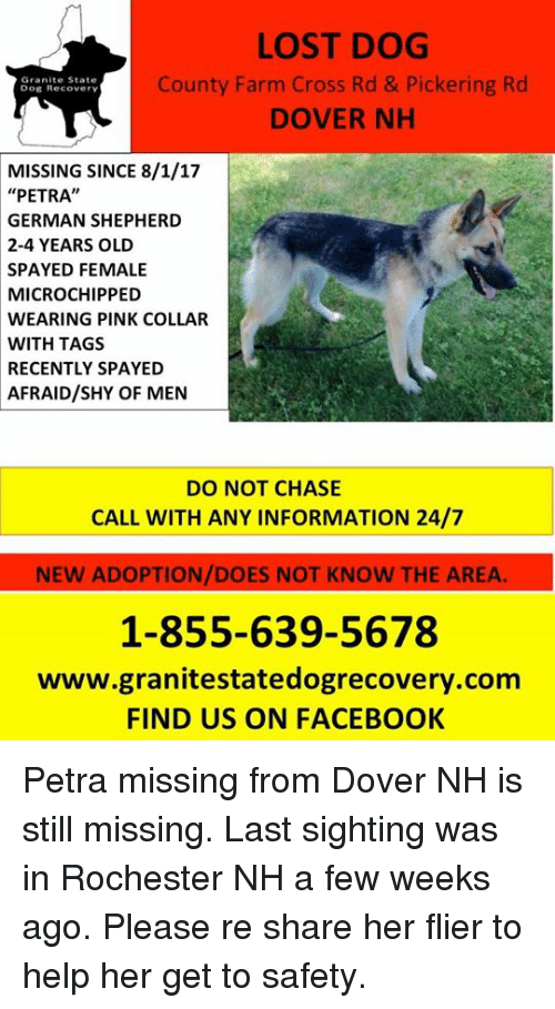 """Facebook, Memes, and Lost: LOST DOG  County Farm Cross Rd & Pickering Rd  DOVER NH  Granite State  Dog Recovery  MISSING SINCE 8/1/17  """"PETRA""""  GERMAN SHEPHERD  2-4 YEARS OLD  SPAYED FEMALE  MICROCHIPPED  WEARING PINK COLLAR  WITH TAGS  RECENTLY SPAYED  AFRAID/SHY OF MEN  DO NOT CHASE  CALL WITH ANY INFORMATION 24/7  NEW ADOPTION/DOES NOT KNOW THE AREA.  1-855-639-5678  www.granitestatedogrecovery.com  FIND US ON FACEBOOK Petra missing from Dover NH is still missing. Last sighting was in Rochester NH a few weeks ago. Please re share her flier to help her get to safety."""