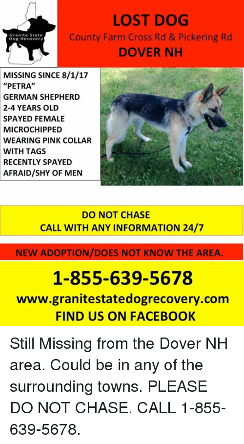 "Facebook, Memes, and Lost: LOST DOG  County Farm Cross Rd & Pickering Rd  DOVER NH  Granite State  Dog Recovery  MISSING SINCE 8/1/17  ""PETRA""  GERMAN SHEPHERD  2-4 YEARS OLD  SPAYED FEMALE  MICROCHIPPED  WEARING PINK COLLAR  WITH TAGS  RECENTLY SPAYED  AFRAID/SHY OF MEN  DO NOT CHASE  CALL WITH ANY INFORMATION 24/7  NEW ADOPTION/DOES NOT KNOW THE AREA.  1-855-639-5678  www.granitestatedogrecovery.com  FIND US ON FACEBOOK Still Missing from the Dover NH area.  Could be in any of the surrounding towns. PLEASE DO NOT CHASE.  CALL 1-855-639-5678."