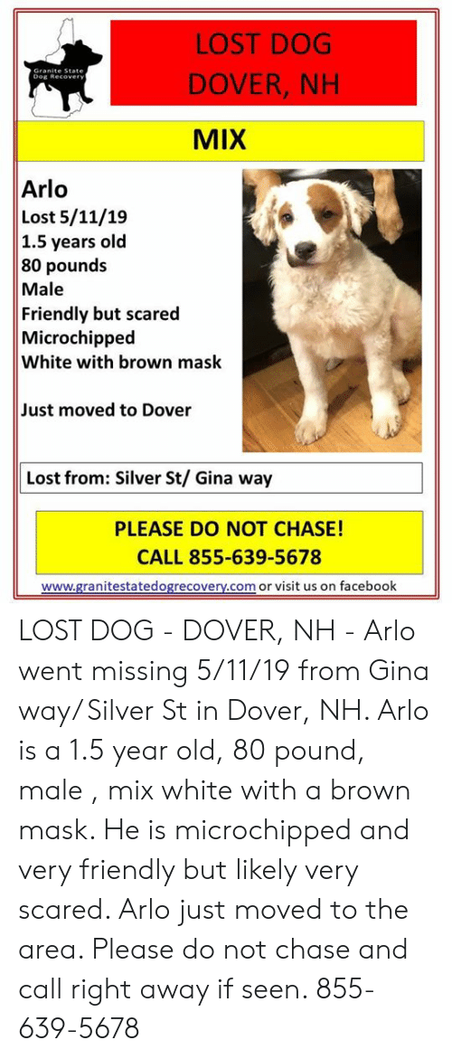 Facebook, Memes, and Lost: LOST DOG  DOVER, NH  MIX  Dog Recover  Arlo  Lost 5/11/19  1.5 years old  80 pounds  Male  Friendly but scared  Microchipped  White with brown mask  Just moved to Dover  Lost from: Silver St/ Gina way  PLEASE DO NOT CHASE!  CALL 855-639-5678  www.granitestatedogrecovery.com or visit us on facebook LOST DOG - DOVER, NH - Arlo went missing 5/11/19 from Gina way/ Silver St in Dover, NH.  Arlo is a 1.5 year old, 80 pound, male , mix white with a brown mask.  He is microchipped and very friendly but likely very scared.  Arlo just moved to the area.  Please do not chase and call right away if seen. 855-639-5678