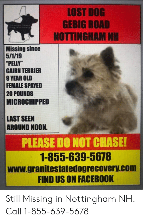 Facebook, Memes, and Lost: LOST DOG  GEBIG ROAD  NOTTINGHAM NH  Missing since  PELLY  CAIRN TERRIER  9 YEAR OLD  FEMALE SPAYED  20 POUNDS  MICROCHIPPED  LAST SEEN  AROUND NOON.  PLEASE DO NOT CHASE  1-855-639-5678  www.granitestatedogrecovery.com  FIND US ON FACEBOOK Still Missing in Nottingham NH.  Call 1-855-639-5678