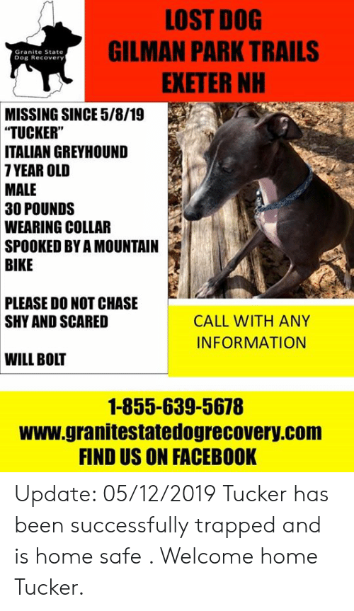 """Facebook, Memes, and Lost: LOST DOG  GILMAN PARK TRAILS  EXETER NH  Granite State  Dog Recovery  MISSING SINCE 5/8/19  """"TUCKER""""  ITALIAN GREYHOUND  7YEAR OLD  MALE  30 POUNDS  WEARING COLLAR  SPOOKED BY A MOUNTAIN  BIKE  PLEASE DO NOT CHASE  SHY AND SCARED  CALL WITH ANY  INFORMATION  WILL BOLT  1-855-639-5678  www.granitestatedogrecovery.com  FIND US ON FACEBOOK Update: 05/12/2019  Tucker has been successfully trapped and is home safe . Welcome home Tucker."""