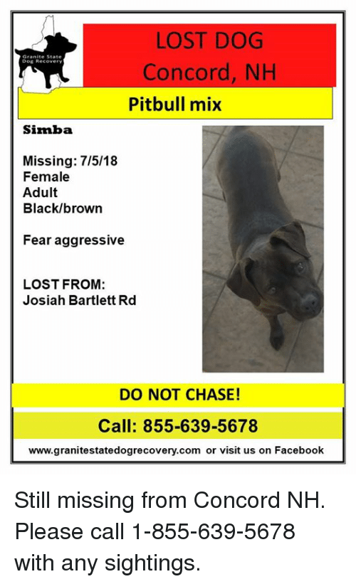 LOST DOG Granite State Dog Recover Concord NH Pitbull Mix Simba