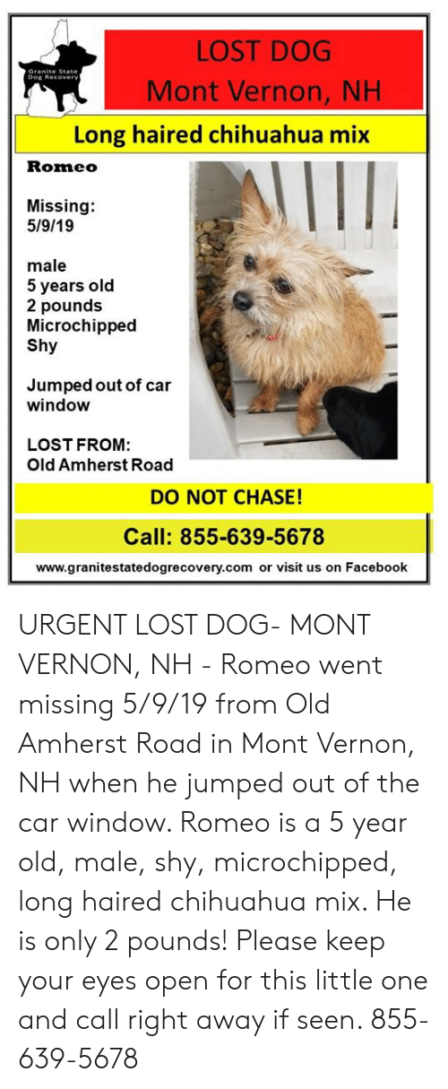 Chihuahua, Facebook, and Memes: LOST DOG  Mont Vernon, NH  Granite State  Dog Recover  Long haired chihuahua mix  Romeo  Missing:  5/9/19  male  5 years old  2 pounds  Microchipped  Shy  Jumped out of car  window  LOST FROM:  Old Amherst Road  DO NOT CHASE!  Call: 855-639-5678  www.granitestatedogrecovery.com or visit us on Facebook URGENT LOST DOG- MONT VERNON, NH - Romeo went missing 5/9/19 from Old Amherst Road in Mont Vernon, NH when he jumped out of the car window.  Romeo is a 5 year old, male, shy, microchipped, long haired chihuahua mix.  He is only 2 pounds! Please keep your eyes open for this little one and call right away if seen. 855-639-5678