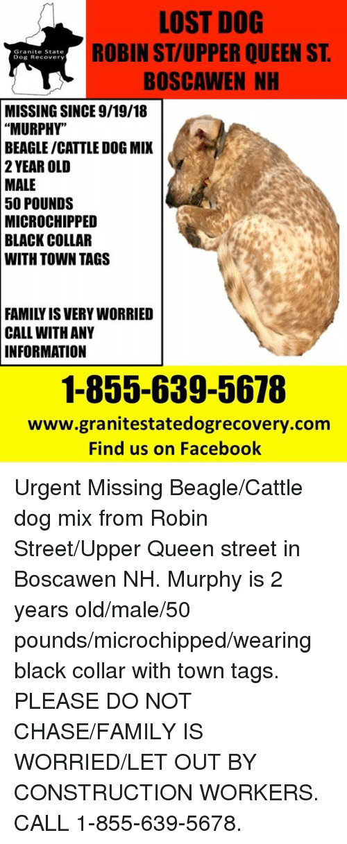 """Facebook, Family, and Memes: LOST DOG  ROBIN ST/UPPER QUEEN ST  BOSCAWEN NH  Granite State  Dog Recovery  MISSING SINCE 9/19/18  """"MURPHY""""  BEAGLE/CATTLE DOG MIX  2 YEAR OLD  MALE  50  POUNDS  MICROCHIPPED  COLLAR  BLACK  WITH TOWN TAGS  FAMILY IS VERY WORRIED  CALL WITH ANY  INFORMATION  1-855-639-5678  www.granitestatedogrecovery.com  Find us on Facebook Urgent Missing Beagle/Cattle dog mix from Robin Street/Upper Queen street in Boscawen NH.  Murphy is 2 years old/male/50 pounds/microchipped/wearing black collar with town tags.  PLEASE DO NOT CHASE/FAMILY IS WORRIED/LET OUT BY CONSTRUCTION WORKERS.  CALL 1-855-639-5678."""