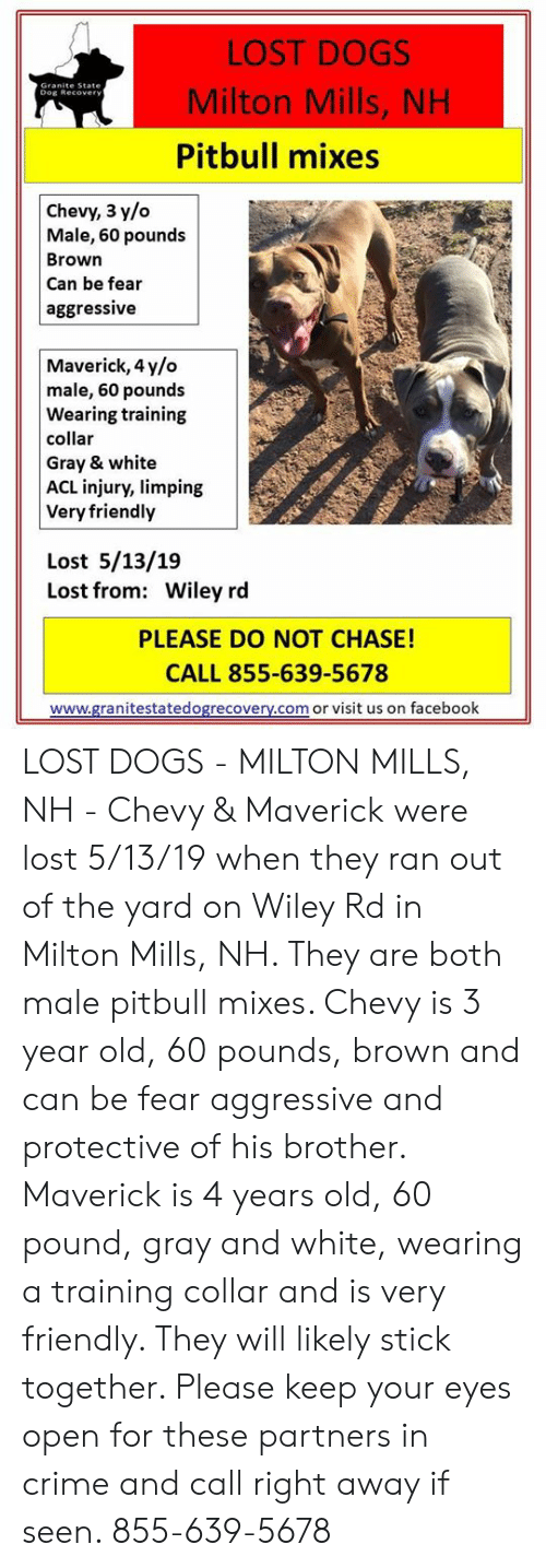 Crime, Dogs, and Facebook: LOST DOGS  Milton Mills, NH  Pitbull mixes  Dog Recover  Chevy, 3 y/o  Male, 60 pounds  Brown  Can be fear  aggressive  Maverick, 4y/o  male, 60 pounds  Wearing training  collar  Gray & white  ACL injury, limping  Very friendly  Lost 5/13/19  Lost from: Wiley rd  PLEASE DO NOT CHASE!  CALL 855-639-5678  www.granitestatedogrecovery.com or visit us on facebook LOST DOGS - MILTON MILLS, NH -  Chevy & Maverick were lost 5/13/19 when they ran out of the yard on Wiley Rd in Milton Mills, NH.  They are both male pitbull mixes.  Chevy is 3 year old, 60 pounds, brown and can be fear aggressive and protective of his brother.  Maverick is 4 years old, 60 pound, gray and white, wearing a training collar and is very friendly.  They will likely stick together.  Please keep your eyes open for these partners in crime and call right away if seen.  855-639-5678