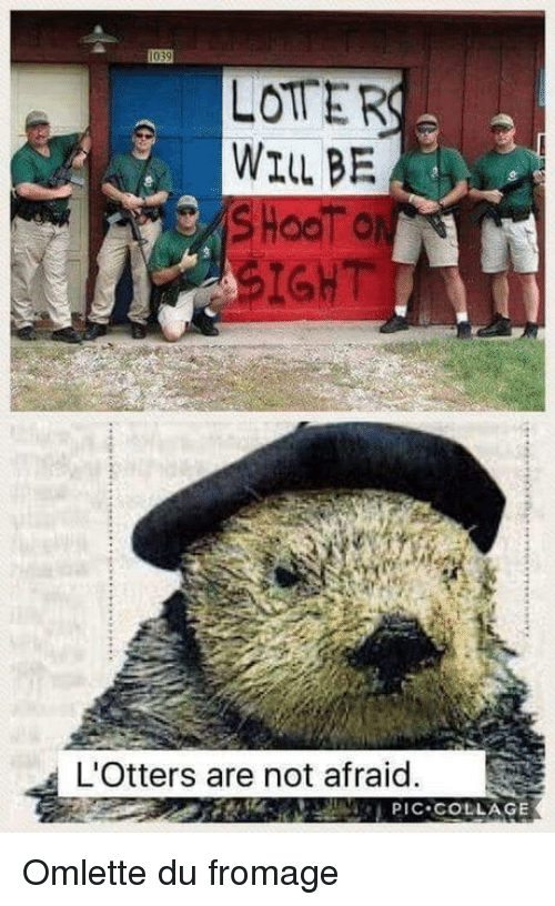 Collage, Will, and Not Afraid: LOTER  WILL BE  SIGHT  L'Otters are not afraid.  PIC COLLAGE Omlette du fromage