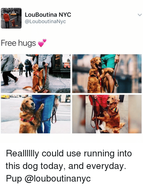 free hug: LouBoutina NYC  @LouboutinaNyc  Free hugs Realllllly could use running into this dog today, and everyday. Pup @louboutinanyc
