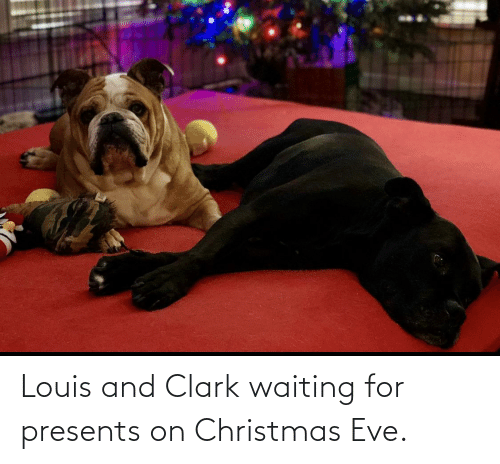 Clark: Louis and Clark waiting for presents on Christmas Eve.