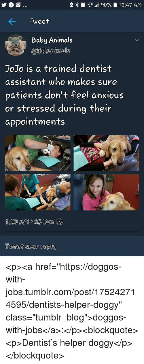"Animals, Tumblr, and Blog: LTE.al 90%  10:47 AM  Tweet  Baby Animals  @RBAnimals  JoJo is a trained dentist  assistant who makes sure  patients don't feel anxious  or stressed during their  aקקointments  Tueet your reply <p><a href=""https://doggos-with-jobs.tumblr.com/post/175242714595/dentists-helper-doggy"" class=""tumblr_blog"">doggos-with-jobs</a>:</p><blockquote><p>Dentist's helper doggy</p></blockquote>"