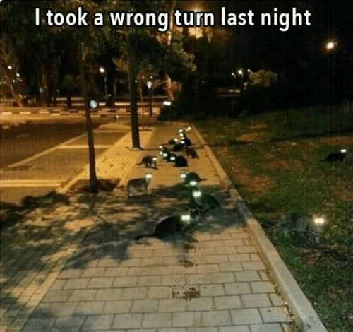 Memes, 🤖, and Wrong Turn: ltook a wrong turn last night