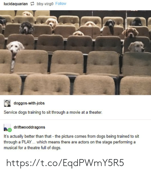 better than that: lucidaquarian bby-virgo Follow  doggos-with-jobs  Service dogs training to sit through a movie at a theater.  driftwooddragons  It's actually better than that - the picture comes from dogs being trained to sit  through a PLAY... which means there are actors on the stage performing a  musical for a theatre full of dogs https://t.co/EqdPWmY5R5