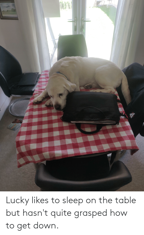 On The Table: Lucky likes to sleep on the table but hasn't quite grasped how to get down.