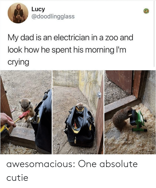 Crying, Dad, and Tumblr: Lucy  @doodlingglass  My dad is an electrician in a zoo and  look how he spent his morning I'm  crying awesomacious:  One absolute cutie
