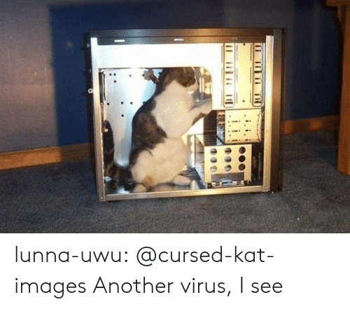 Tumblr, Blog, and Images: lunna-uwu:  @cursed-kat-images   Another virus, I see