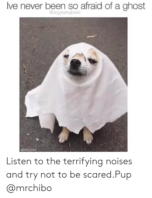 Instagram, Target, and Ghost: lve never been so afraid of a ghost  @dogsbeingbasic  MRCHIBO Listen to the terrifying noises and try not to be scared.Pup @mrchibo