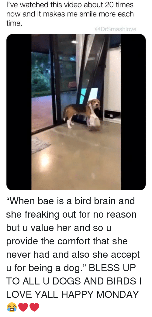 """times now: l've watched this video about 20 times  now and it makes me smile more each  time.  @DrSmashlove """"When bae is a bird brain and she freaking out for no reason but u value her and so u provide the comfort that she never had and also she accept u for being a dog."""" BLESS UP TO ALL U DOGS AND BIRDS I LOVE YALL HAPPY MONDAY 😂❤️❤️"""