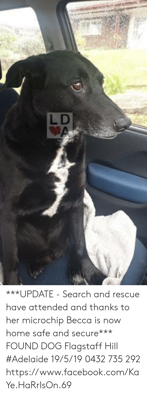 Facebook, Memes, and facebook.com: ly  LD ***UPDATE - Search and rescue have attended and thanks to her microchip Becca is now home safe and secure***  FOUND DOG Flagstaff Hill #Adelaide 19/5/19 0432 735 292 https://www.facebook.com/KaYe.HaRrIsOn.69