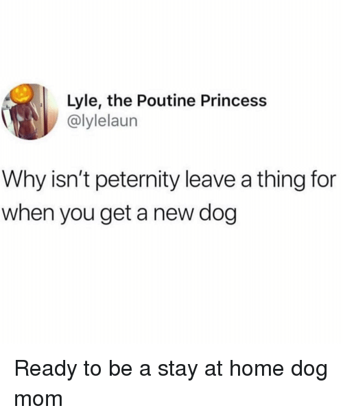 New Dog: Lyle, the Poutine Princess  @lylelaun  Why isn't peternity leave a thing for  when you get a new dog Ready to be a stay at home dog mom