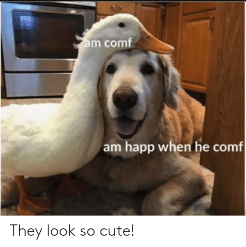 Cute, Reddit, and They: m comf  am happ when he comf They look so cute!