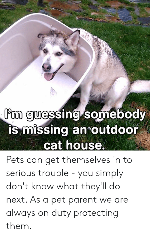 Memes, Pets, and House: 'm guessing somebody  Phm guessing Somebody  IS miSSing an outdoor  cat house Pets can get themselves in to serious trouble - you simply don't know what they'll do next. As a pet parent we are always on duty protecting them.