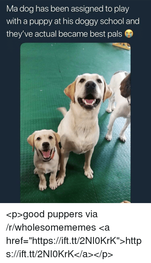 "School, Best, and Good: Ma dog has been assigned to play  with a puppy at his doggy school and  they ve actual became best pals <p>good puppers via /r/wholesomememes <a href=""https://ift.tt/2NI0KrK"">https://ift.tt/2NI0KrK</a></p>"
