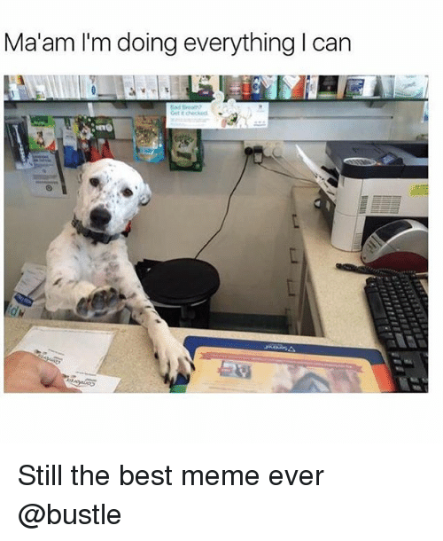 best memes ever: Ma'am I'm doing everything I can Still the best meme ever @bustle