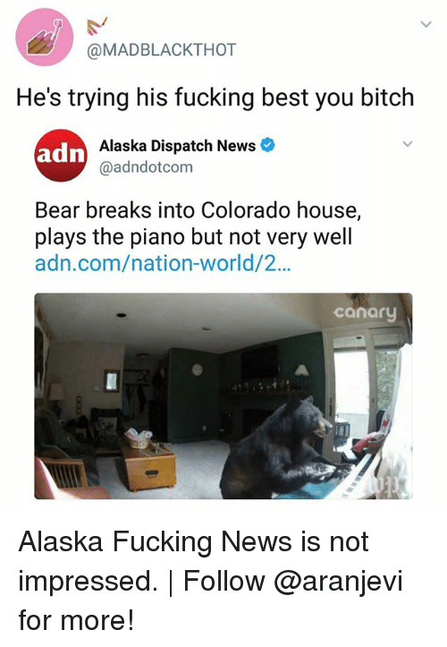 bearings: @MADBLACKTHOT  He's trying his fucking best you bitch  Alaska Dispatch News  @adndotcom  Bear breaks into Colorado house,  plays the piano but not very well  adn.com/nation-world/2...  canary Alaska Fucking News is not impressed. | Follow @aranjevi for more!