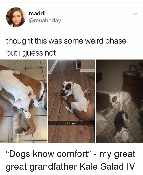 """guess not: maddi  @muahhday  thought this was some weird phase  but i guess not  I don't get it """"Dogs know comfort"""" - my great great grandfather Kale Salad IV"""