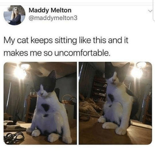 Memes, 🤖, and Cat: Maddy Melton  @maddymelton3  My cat keeps sitting like this and it  makes me so uncomfortable.