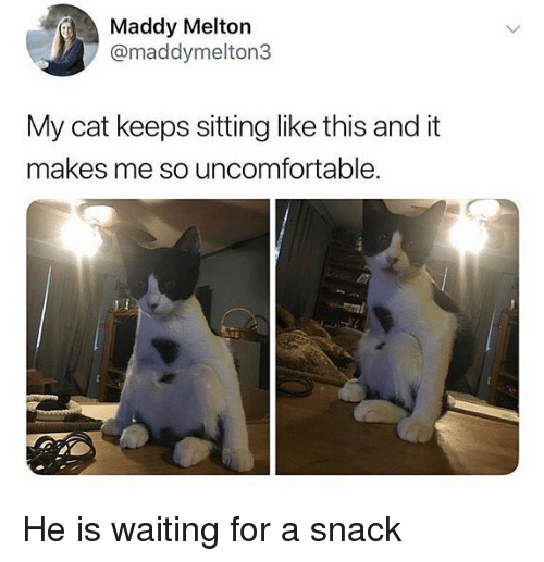 Memes, Waiting..., and 🤖: Maddy Melton  @maddymelton3  My cat keeps sitting like this and it  makes me so uncomfortable He is waiting for a snack