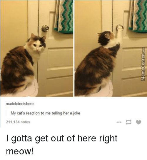 madeleine: madeleine ishere  My cat's reaction to me telling her a joke  211,134 notes I gotta get out of here right meow!