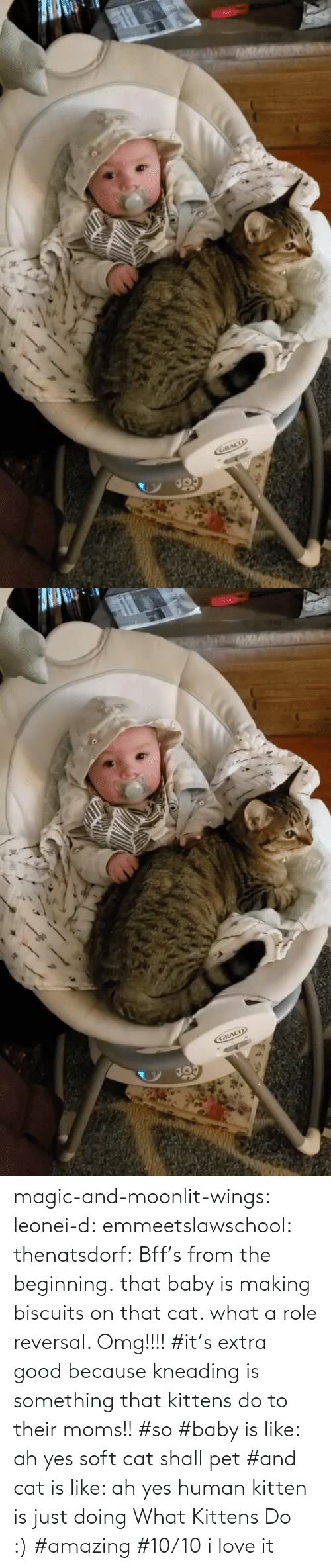 what a: magic-and-moonlit-wings: leonei-d:  emmeetslawschool:  thenatsdorf: Bff's from the beginning. that baby is making biscuits on that cat. what a role reversal.    Omg!!!!     #it's extra good because kneading is something that kittens do to their moms!! #so #baby is like: ah yes soft cat shall pet #and cat is like: ah yes human kitten is just doing What Kittens Do :) #amazing #10/10 i love it