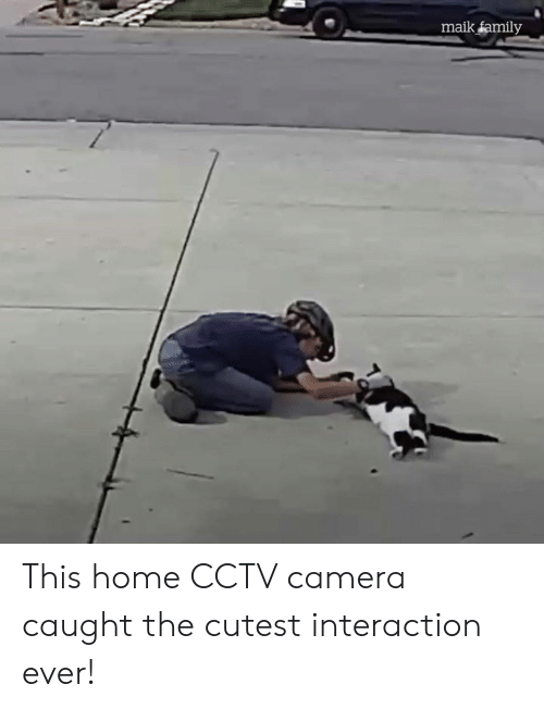 Family, Memes, and Camera: maik family This home CCTV camera caught the cutest interaction ever!