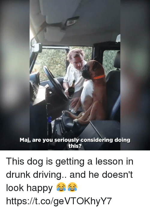 Driving, Drunk, and Memes: Maj, are you seriously considering doing  this? This dog is getting a lesson in drunk driving.. and he doesn't look happy 😂😂 https://t.co/geVTOKhyY7