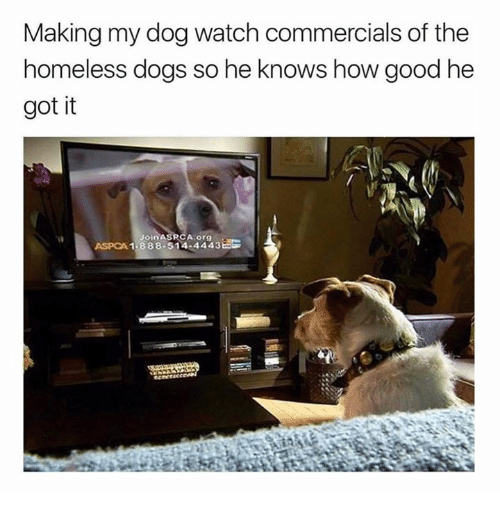 Dogs, Homeless, and Memes: Making my dog watch commercials of the  homeless dogs so he knows how good he  got it  А.org  ASPCA 1-888-514-4443Bs
